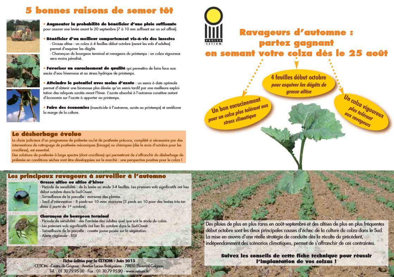 Sud de la france semer les colzas pour le 25 ao t - Semer en aout ...