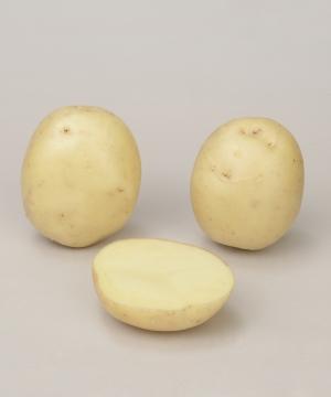 Photo du Pommes de terre de consommation Rumba