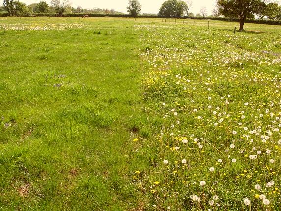 Photo du Herbicides prairies Opti-Pré