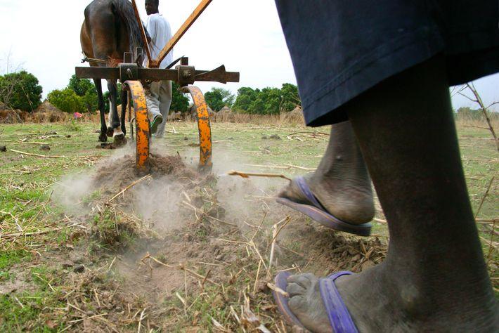 Photo du Associations civiles L'amélioration des productions agricoles et la gestion durable des ressources naturelles