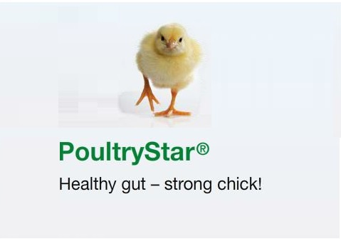 Photo du additifs alimentaires PoultryStar