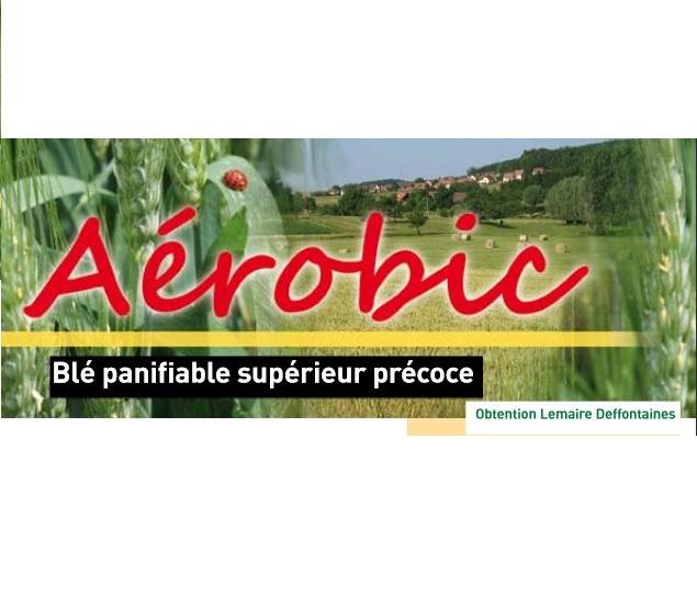 Photo du variétés blé d'hiver Aerobic