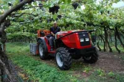 Photo du Tracteurs fruitiers MF 3325 F Arceau Rabattable