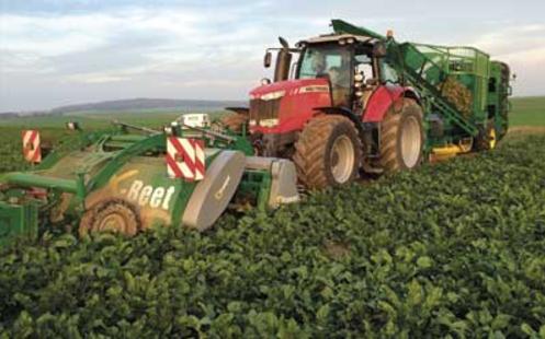 Photo du Récolte des betteraves X-Beet