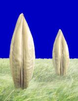 Photo du variétés d'orge d'hiver 2 rangs Menhir