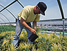 Photo du Aides et Prêts à l'installation Jeunes Agriculteurs +