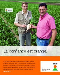 Photo du variétés de betteraves sucrières Nordika