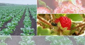 Photo du Herbicides cultures industrielles Betanal