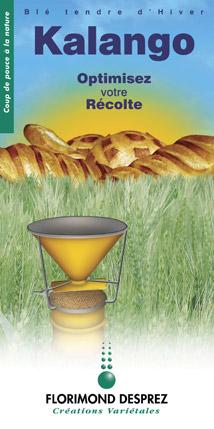 Photo du variétés blé d'hiver Kalango