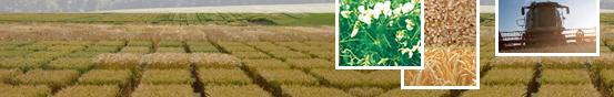 Photo du variétés blé d'hiver PR22R58