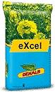 Photo du variétés de colza d'hiver Excel