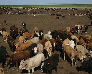 Photo du Traitement des maladies respiratoires des chevaux Draxxin