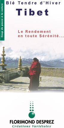 Photo du variétés blé d'hiver Tibet