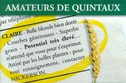 Photo du variétés blé d'hiver Claire