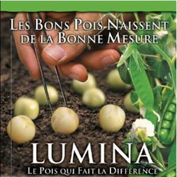 Photo du variétés de pois de printemps Lumina