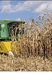 Photo du Cueilleurs à maïs LO2