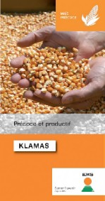 Photo du Variétés de maïs grain Klamas