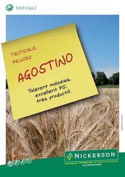 Photo du variétés de triticale Agostino