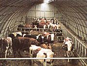 Photo du Construction bâtiments Stockage matériels et animaux
