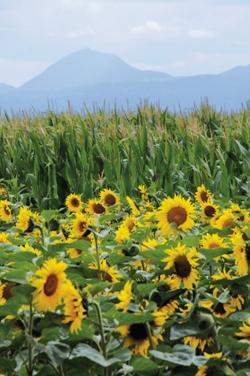 Photo du Coopératives de commercialisation des céréales Limagrain Agro-Productions