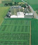 Photo du variétés blé d'hiver Sweet