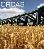 Photo du variétés blé d'hiver Orcas