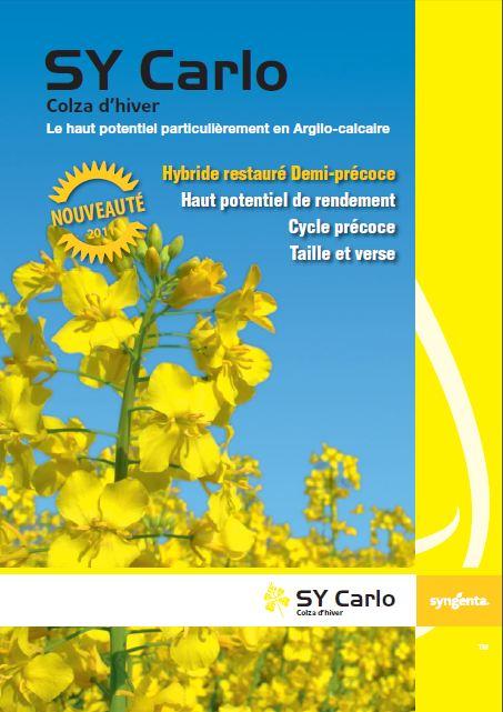 Photo du variétés de colza d'hiver SY Carlo