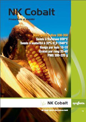 Photo du Variétés de maïs grain NK Cobalt