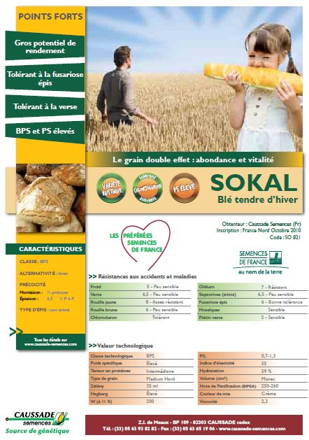 Photo du variétés blé d'hiver Sokal
