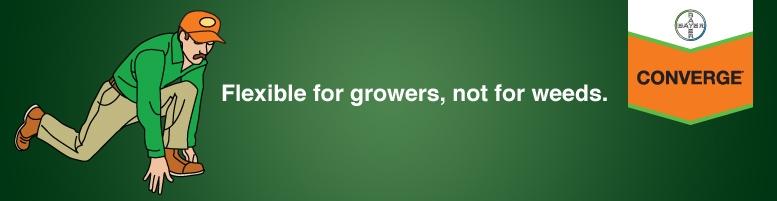 Photo du Herbicides maïs Converge XT, Converge Flexx, Converge PRO