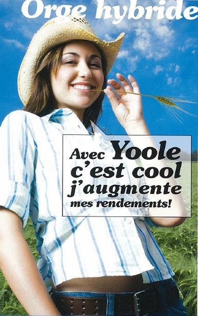 Photo du variétés d'orge d'hiver 6 rangs Yoole