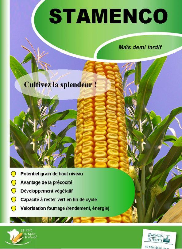 Photo du Variétés de maïs mixte Stamenco
