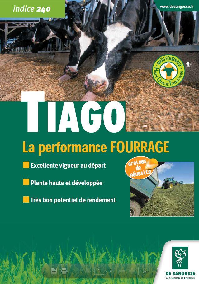 Photo du Variétés de maïs fourrager Tiago