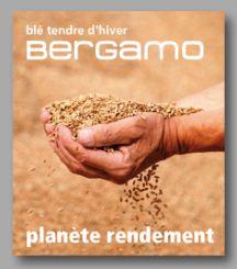 Photo du variétés blé d'hiver Bergamo
