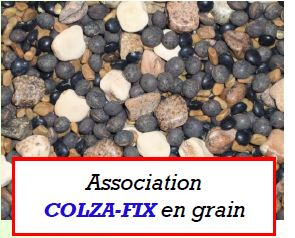 Photo du Plantes compagnes du colza Colza-Fix