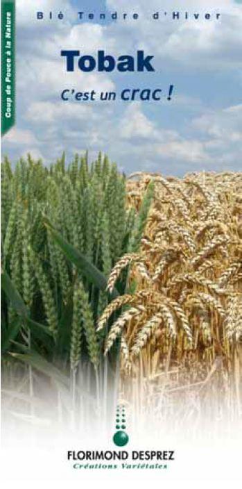 Photo du variétés blé d'hiver Tobak