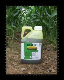 Photo du Herbicides maïs Cambio