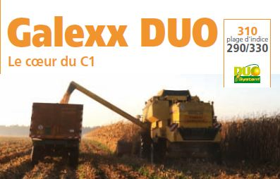 Photo du Variétés de maïs grain Galexx DUO