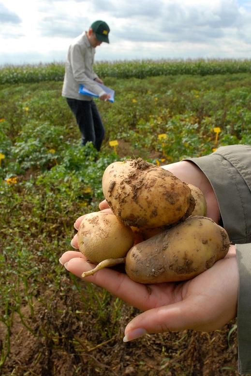 Photo du Salons professionnels Potato Europe 2012