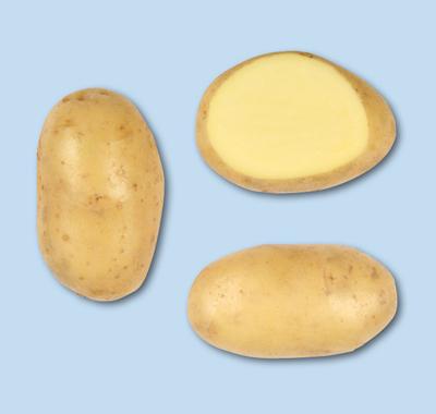 Photo du Pommes de terre de consommation Challenger
