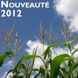 Photo du Variétés de maïs grain Clovis