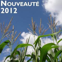 Photo du Variétés de maïs fourrager Balasco