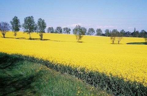 Photo du Herbicides Oléagineux Alabama