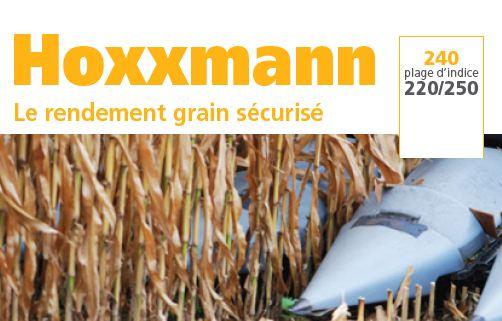 Photo du Variétés de maïs grain Hoxxmann