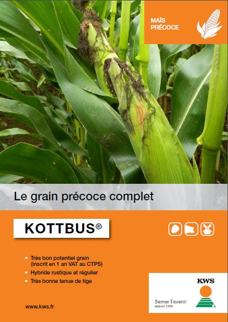 Photo du Variétés de maïs grain Kottbus