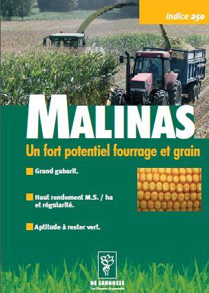 Photo du Variétés de maïs mixte Malinas