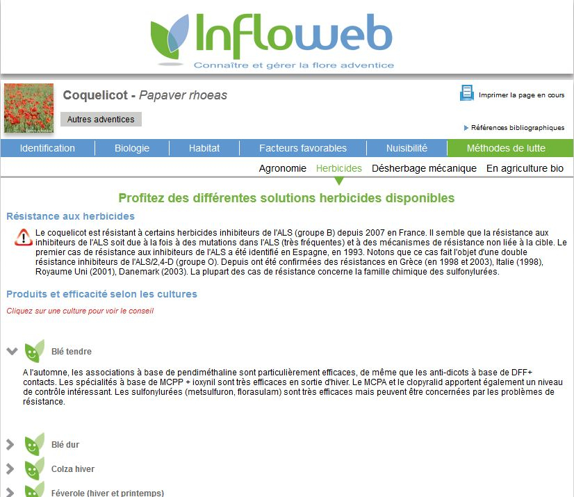 Photo du Blogs Infloweb