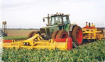 Photo du Récolte des betteraves Effeuilleuse 12 rangs