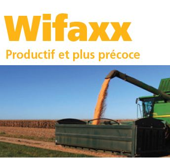 Photo du Variétés de maïs grain Wifaxx